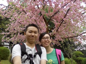 Pohon Sakura di WoW
